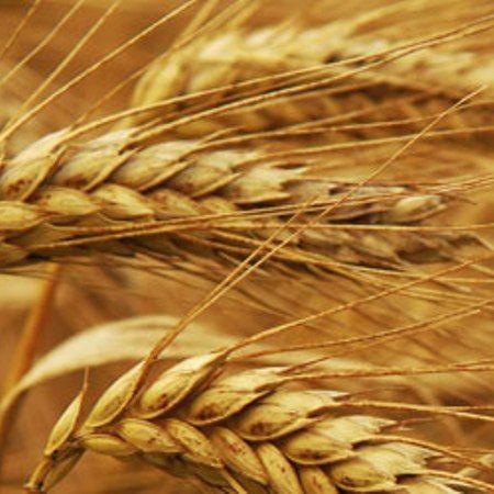 Glutensensitiviteit (Coeliakie)