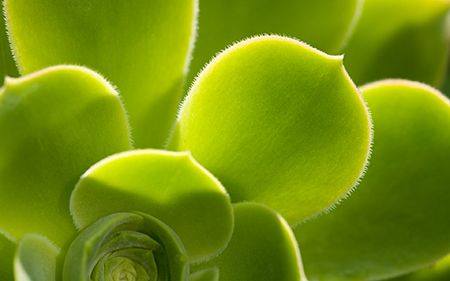 Zuiverende Planten Slaapkamer : Kamerplanten die de lucht zuiveren voeding en gezondheid