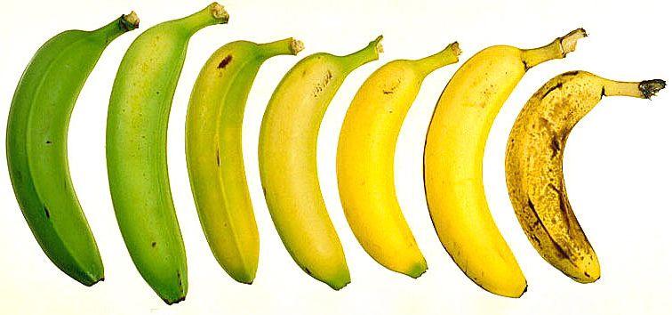 Een bananenleven