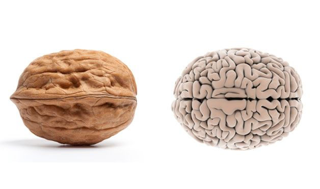 walnoot_hersenen
