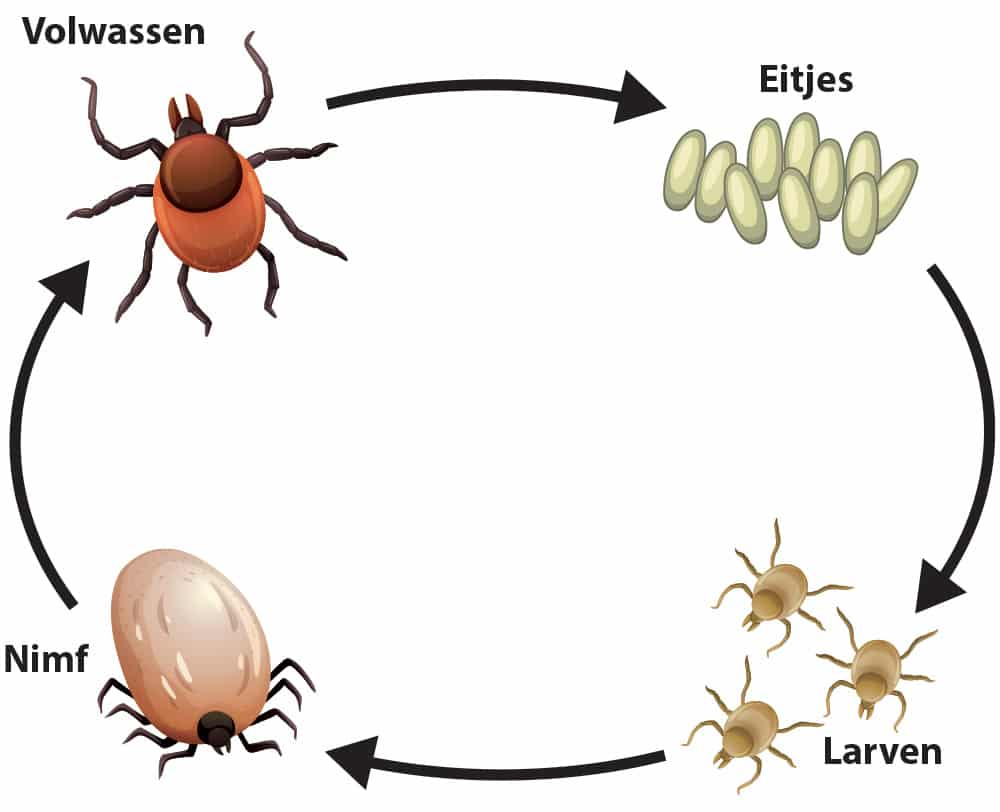 Teken levenscyclus